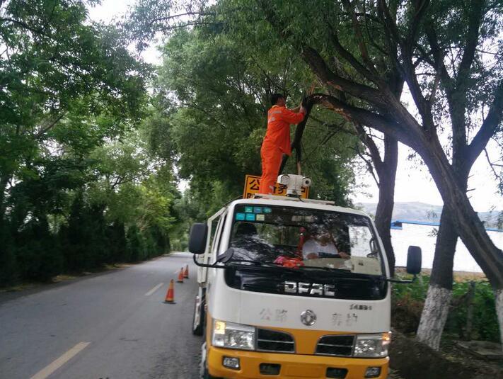 武山公路管理段及时清理倾倒树木排除道路安全隐患